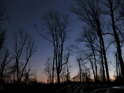Trees against night sky
