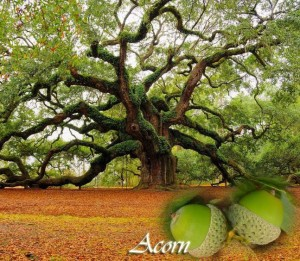 You are the acorn, your entelechy is the oak tree!