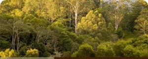 australianbush