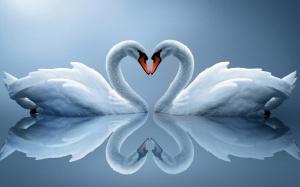 swanloveheart
