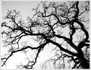 http://swardraws.com/fotog1/2009/winter-tree/