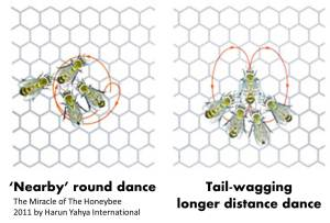 From Paige Brown's blog SciLogs: http://www.scilogs.com/from_the_lab_bench/super-hero-experiment-2-the-waggle-dance/