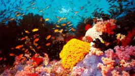 great barrier reef 4