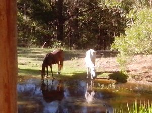 Horses at the waterhole.