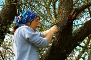 Woman pruning tree.